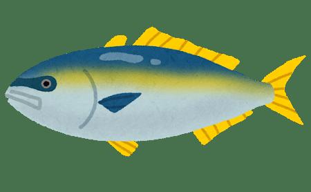 魚へんに師と書く漢字「鰤」の読み方や由来は?
